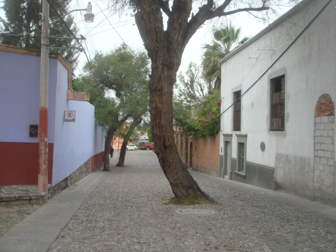 Only in Mexico is their a tree in the middle of the road!