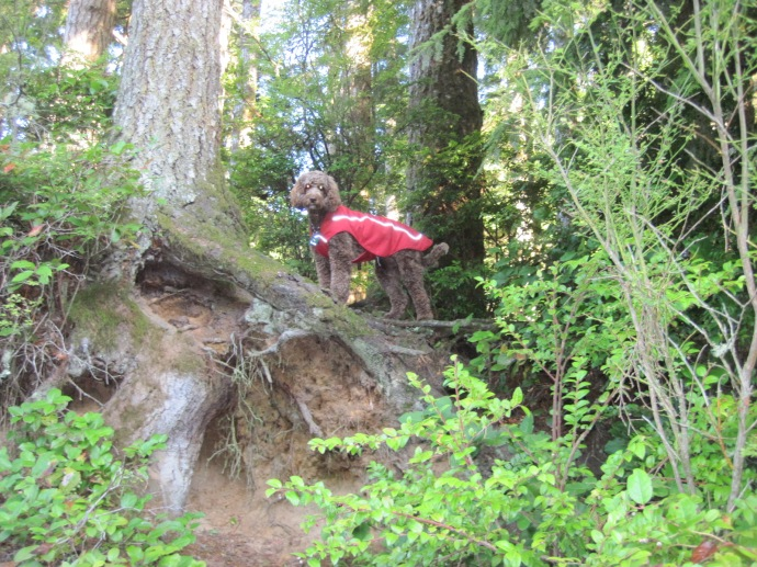 RedWoods to Mexican Boarder-0002